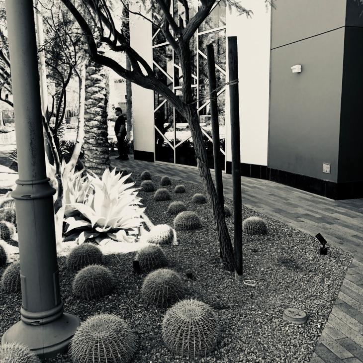 bw cacti